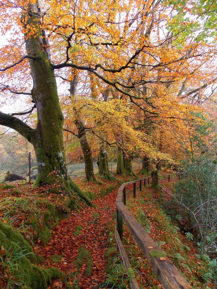 "wanderthewood: "" Morag's Fairy Glen, Dunoon, Scotland by Hugh Spicer """