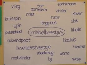 Project kriebelbeestjes / insecten!
