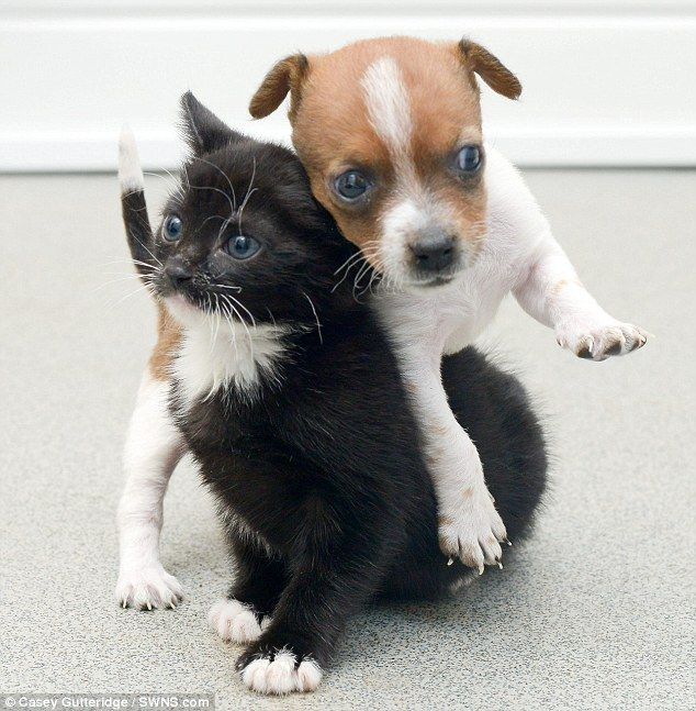 Best Puppies And Kitties Ideas On Pinterest Cute Puppies And - Cat squirrel playing cutest thing youll see day
