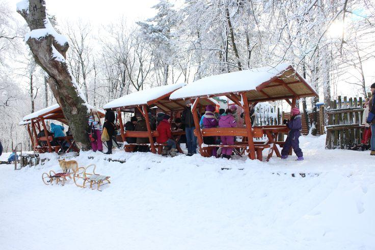 Normafa in Buda Hill winter