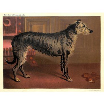 Check out this item at One Kings Lane! Scottish Deerhound, C. 1885
