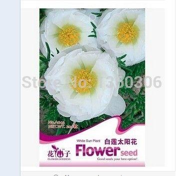 Белые цветы в горшках цветочные феи семена цветов - длительный период цветения может быть посева умножить