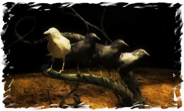 Η μάγισσα και το άσπρο κοράκι
