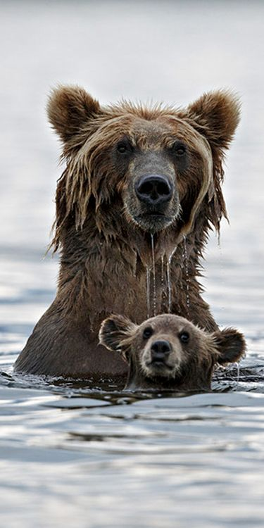 Swimming lessons - from Mamma Bear to Baby Bear! @FuzzTherapy has great #gift selections for Mamma Bears and Baby Bears!