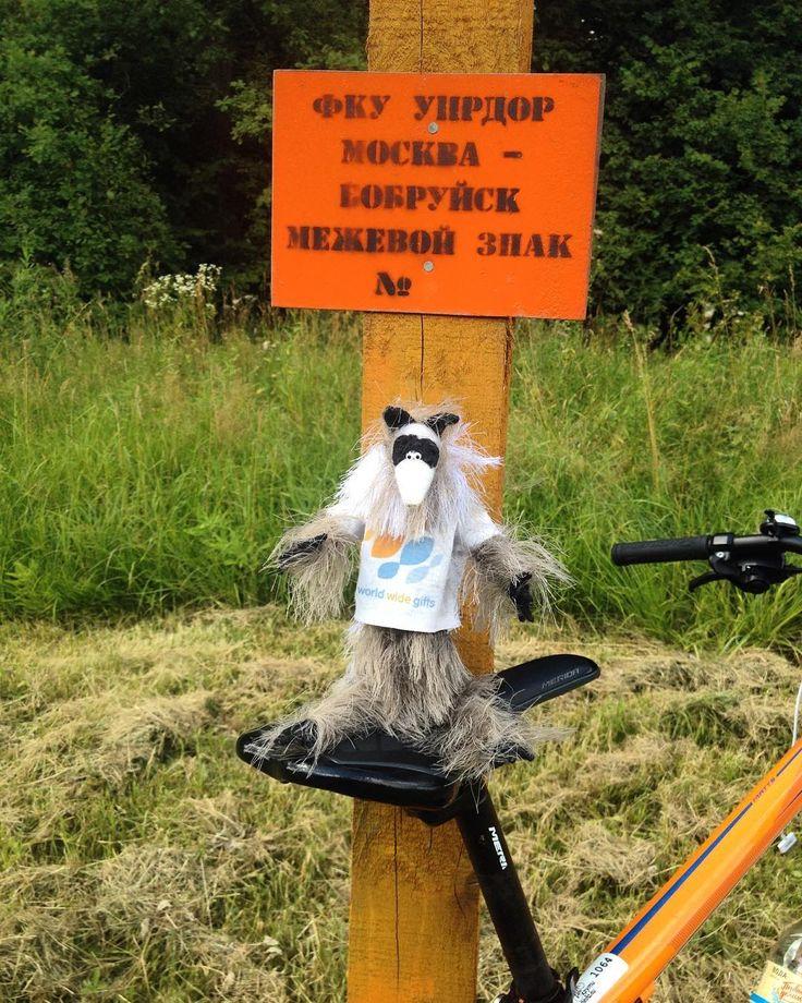 В Бобруйск жЫвотное!!!  #бобруйск Raccoon Pedro & #bike. #bikelove #bikelife #bikestagram #bicycle #travel #travelling #russia #россия #велосипед #путешествия #worldwidegifts