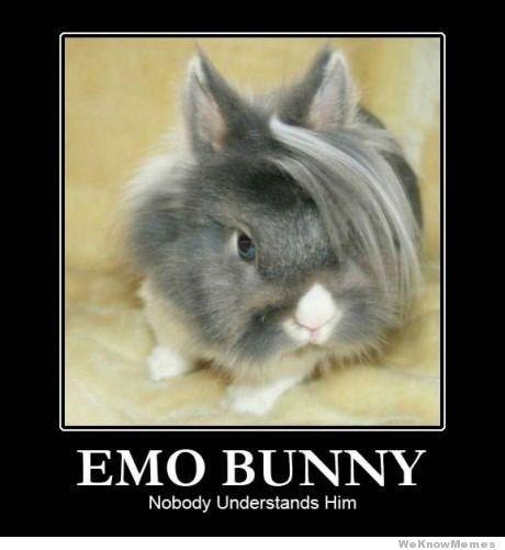 emo-bunny-nobody-understands-him