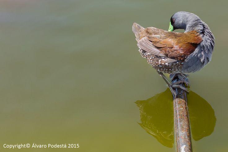 Reflejo de ave