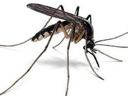 Mit+tartalmaz+a+bolti+szúnyogriasztó? A+DEET+az+egyik+leggyakrabban+előforduló+alapanyaga+azoknak+a+szúnyogriasztóknak+és+krémeknek+melyeket+magunkra,+vagy+kisgyermekünkre+használunk.+Felszívódása+a+bőrön+keresztül+történik,+ahonnan+bejut+a+véráramba.+Többféle+egymásnak…