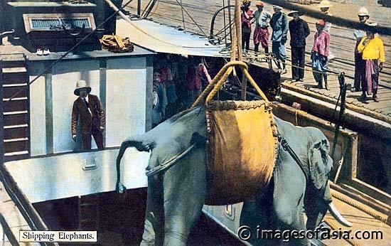 Shipping Elephants, 1905