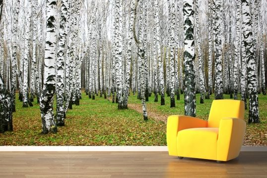 White birch forest mural wallpaper forests feature for Brewster birch wall mural