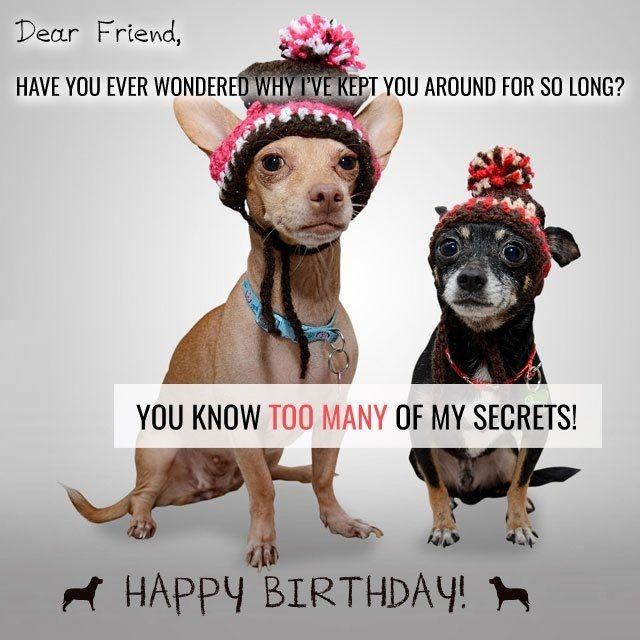Best 25 Funny Birthday Wishes Ideas On Pinterest: 25+ Best Ideas About Funniest Birthday Wishes On Pinterest