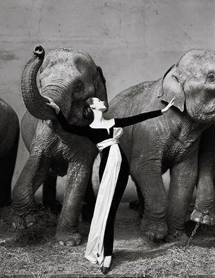 Dovima with elephants © Richard Averdon, 1955