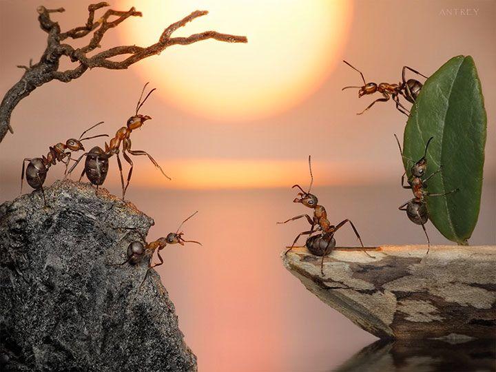 Une vie de fourmis by Andrey Pavlov