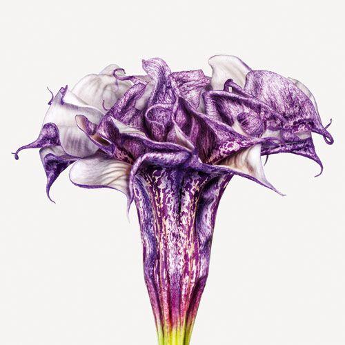 Andrew Zuckerman The Flower Book - 04