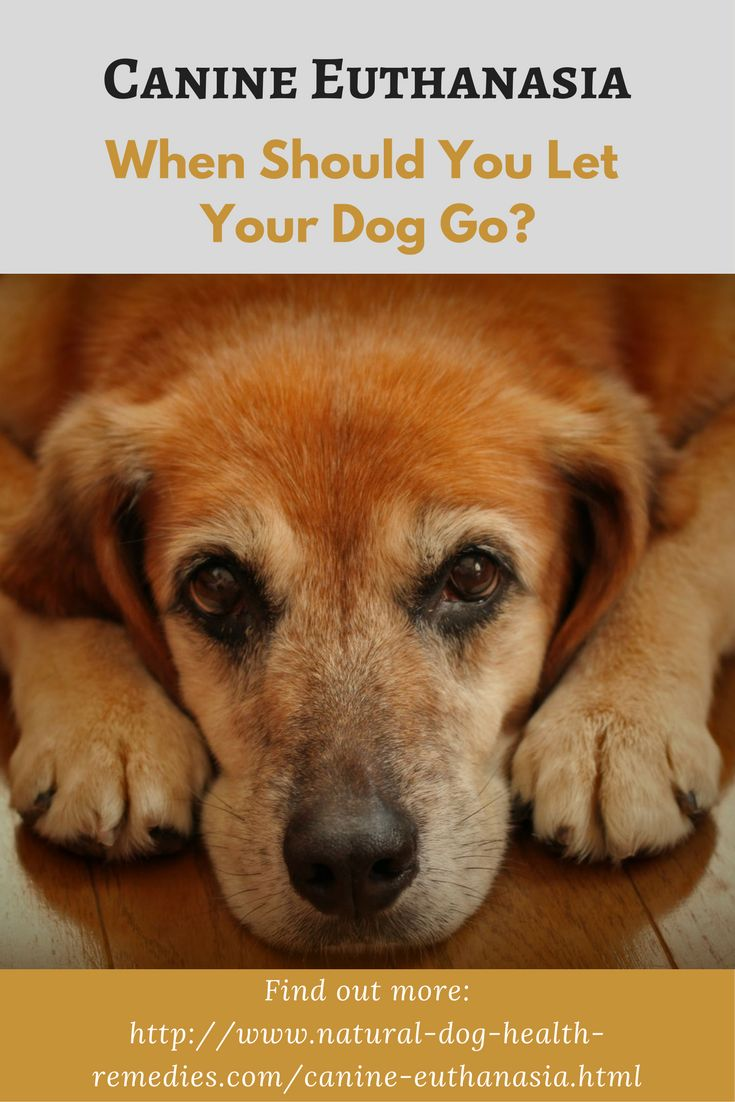 Euthanasia is a hard decision for dog parents to make. Read this page for help and advice.