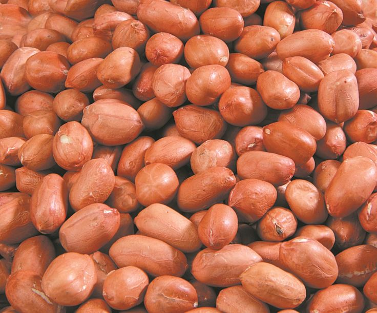 Organic Products India is leading Groundnut kernels exporter and supplier in India. High quality Groundnut or Peanut kernels are available bulk in container or custom packaging options.