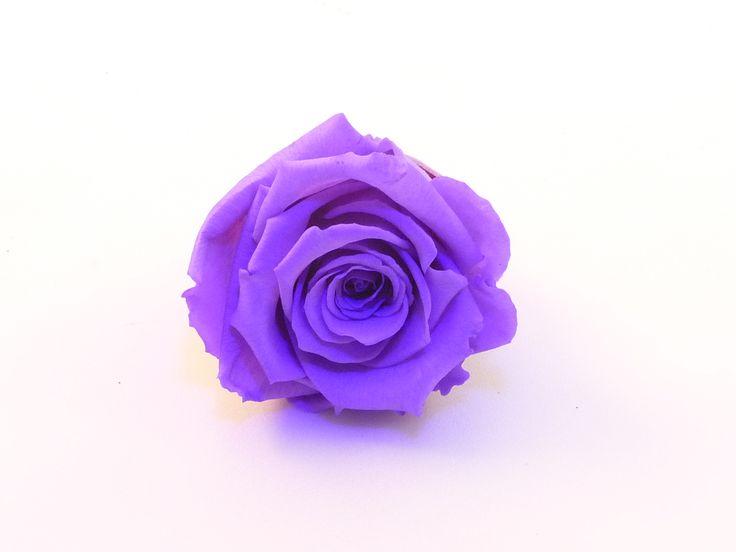 rose éternelle de couleur Violet, parfait pour une décoration florale de longue durée.