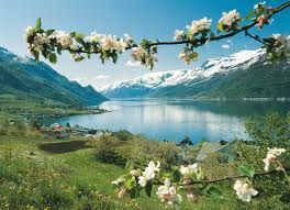 Norway in bloom <3 May - when all the farms in Hardanger are in full bloom!