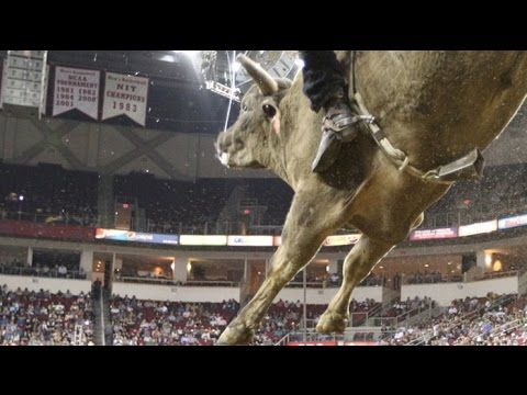 Long John earns 45.25-point bull score (PBR) - Published on Oct 22, 2015  Sweet Pro's Long John earns 45.25-point bull score and bucks off Alexander Cardozo in Round 2 of the PBR BFTS World Finals in Las Vegas, NV.