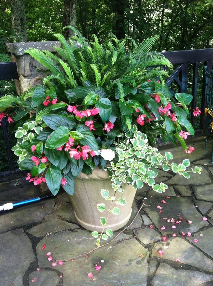 Shade container easy low maintenance flowers planters for Low maintenance potted flowers outdoor