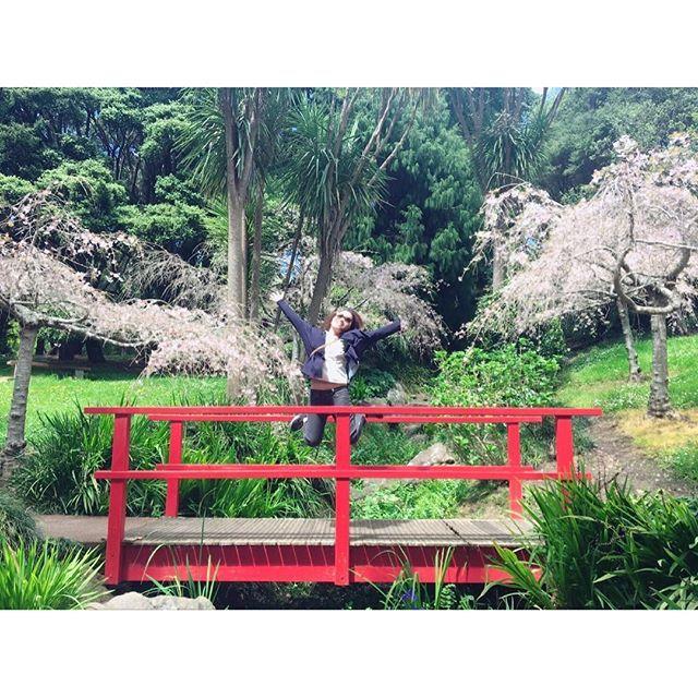 【sayuik】さんのInstagramをピンしています。 《日本ぽいところ発見🍡🌸 #桜 #さくら #aucklanddomain # オークランド #ニュージーランド #auckland #綺麗 #枝垂れ桜っぽい #でも #ほぼ葉桜 #可愛いけどね #綺麗だった #1年半ぶり #見た #cherryblossom #japanesestyle #bridge #jumped #excited #only #abit #😜》