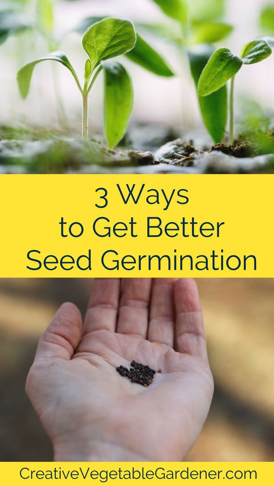seeds germination practical For difficult seeds and rare seeds, the most reliable method of germination is the plastic bag method for this method, seeds are blanketed in damp sphagnum moss and germinated in zipper-type, re-sealable plastic bags.