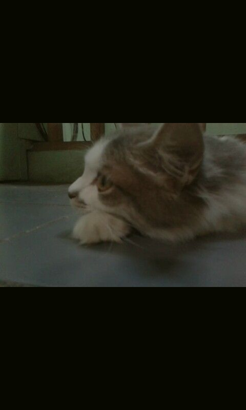 Cats :v