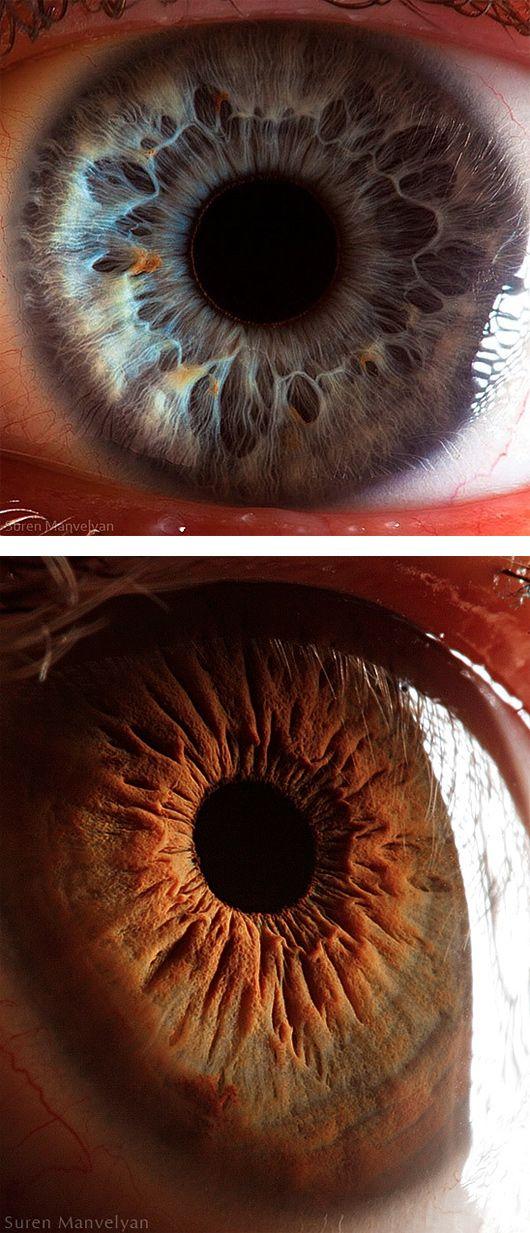 """Estas fotografías delfotógrafo armenioSuren Manvelyanme han llamado mucho la atención . Forman parte de la colección """"You beautiful eyes"""" y con un macro increíble, nos muestra con to…"""