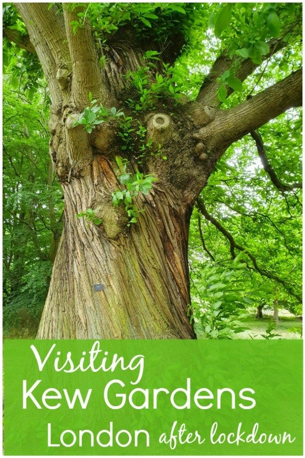 17c2207205b5249cea31b6b09238f76a - Best Day To Visit Kew Gardens