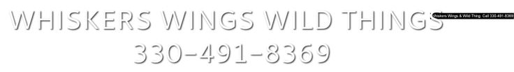 """Whiskers Wings & Wild Things is family owned and operated old fashioned pet store in Canton Ohio, voted """"Best Pet Shop"""" in Stark County. Located at 1200 30th Street N.W., Canton Ohio, 44709  Phone:330-491-8369 they specialize in all areas of your pet care from pet supplies, grooming, feeders to variety of reptiles, hamsters and more! Check out the pet store or visit http://www.whiskerswingswildthings.com/ for more information."""