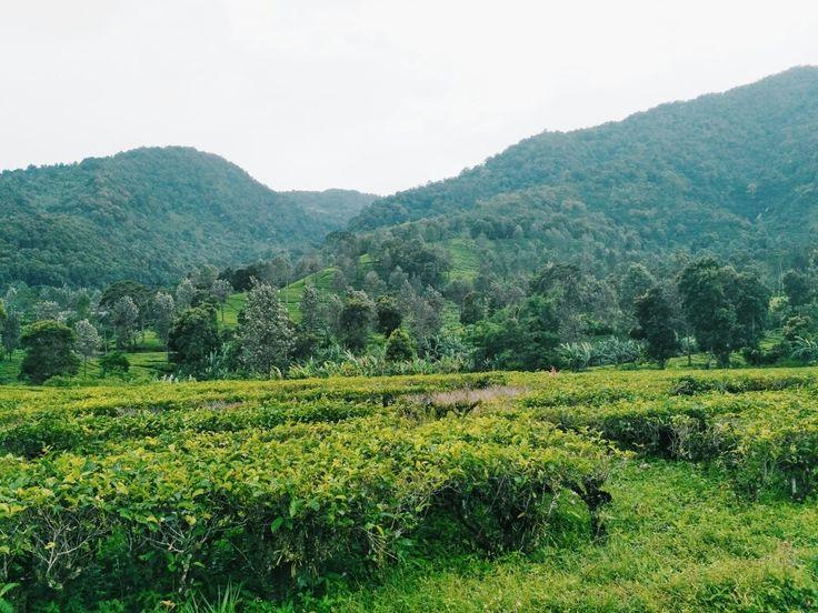Agrowisata Gunung Mas, Bogor, Indonesia