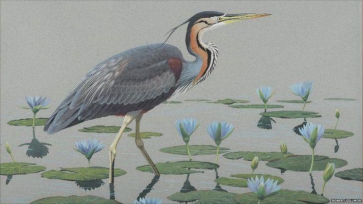 Grey Heron by Robert Gillmor