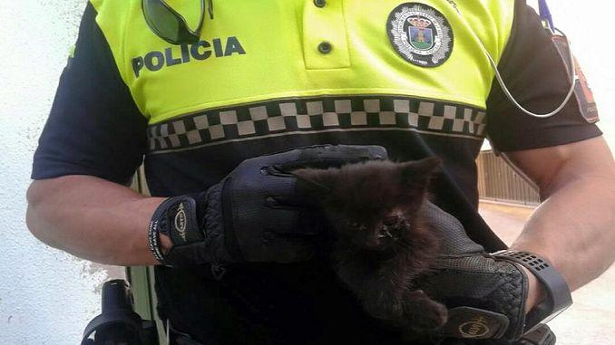 La Policía Local de Jaraíz de la Vera (Cáceres) ha recibido una llamada telefónica alertando que desde hacía dos días estaban escuchando maullar a un gato y que el maullido provenía del interior del capó de un vehículo estacionado en la vía pública.