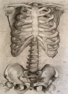 ribcage sketches