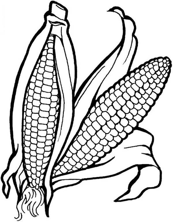 thanksgiving coloring pages corn - photo#22
