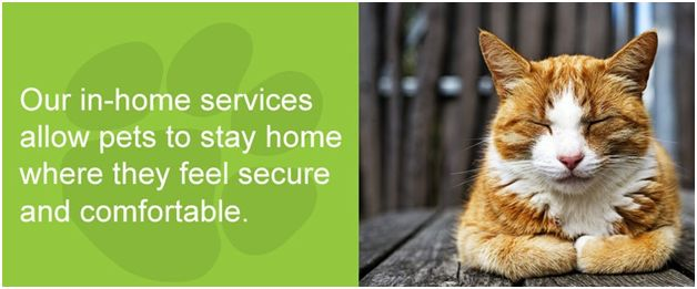 We are launching our Pet Sitting services soon!  Are you going on holiday and need a trustworthy sitter to look after your pets? Our sitters love your home & pets like you do!