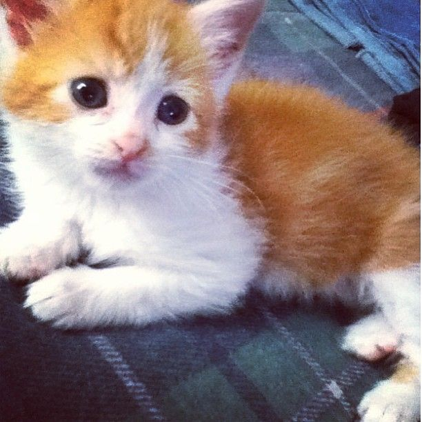 http://funnypetvideos.net/  Adorable kittens are in perfect harmony in cute video