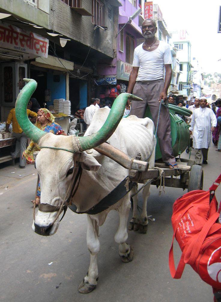 Transporte animal en la India