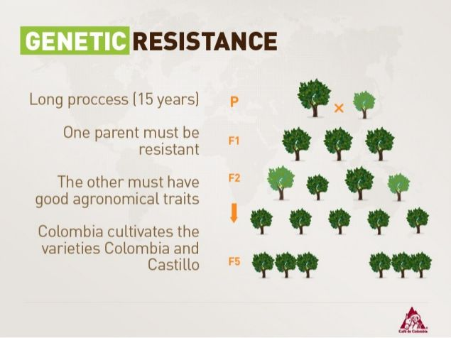 Genetic Resistance Long Process (15 Years)