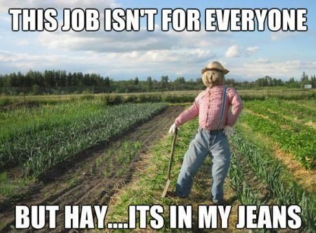 gardening  funny  humor  garden  plant. 78 Best images about Gardening Humor  Very Funny   on Pinterest