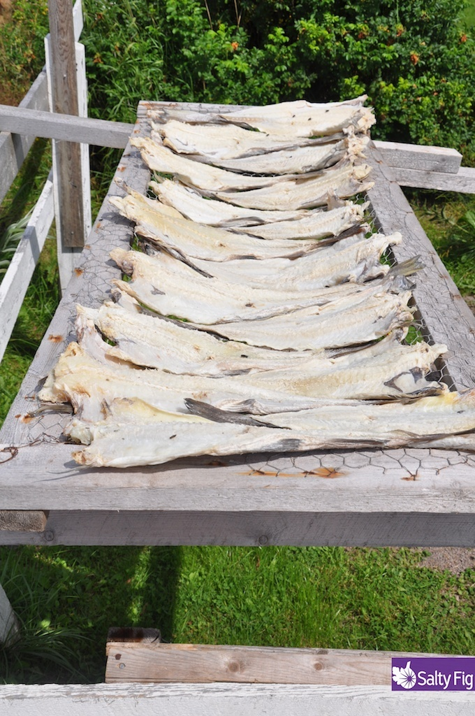 New Bonaventure, Newfoundland Cod drying in the sun.