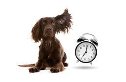 Hogyan értelmezik a kutyák az idő fogalmát?  #kutya #hírek #idő #kutatás #dog #time #kutyabarathelyek