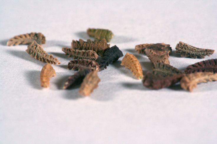 seed-seeds-bone-359626-o.jpg (2048×1365)