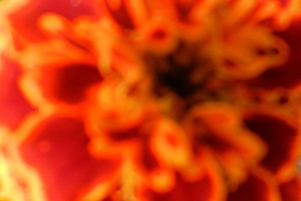 Garden flowers - Extreme closeup - 800