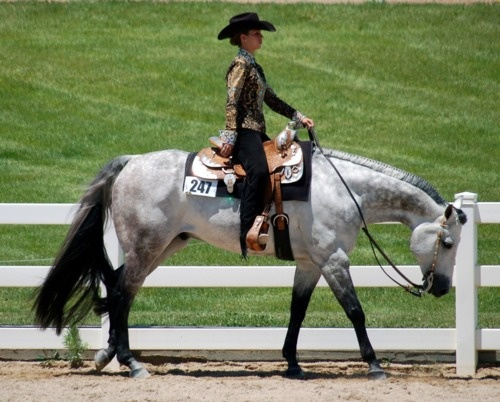 This is actually a Western Pleasure horse (hence the fancy outfit and show saddle) and they are trained to keep their head down. There's nothing wrong with it, that's just what they are trained to do.
