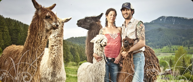 Montana Alpaca Farms | Suri Alpacas For Sale, Alpaca Yarn, Scarves, Cowls, Saddle Blankets