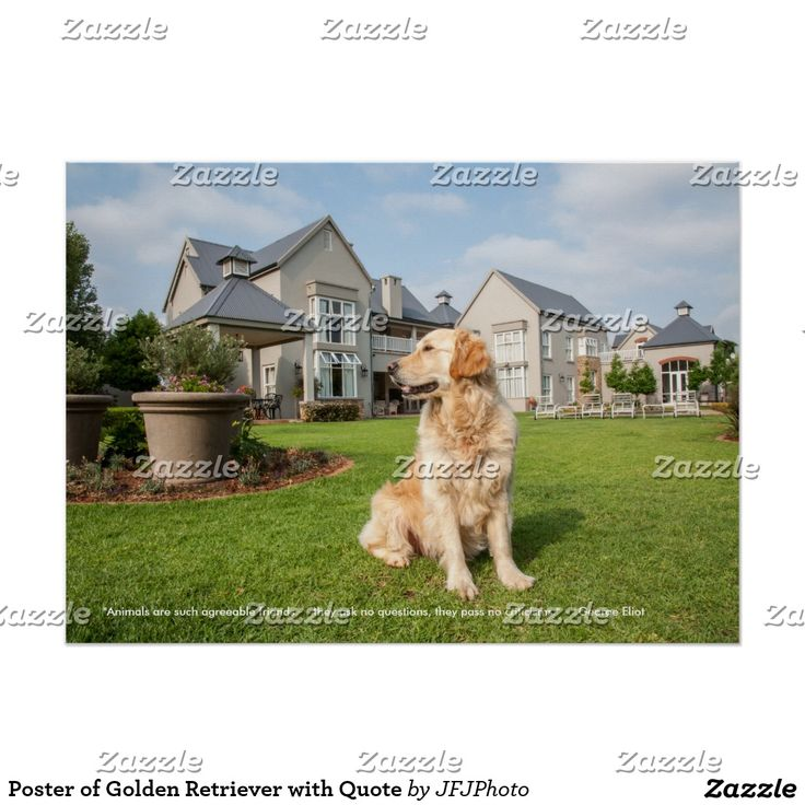Poster of Golden Retriever with Quote