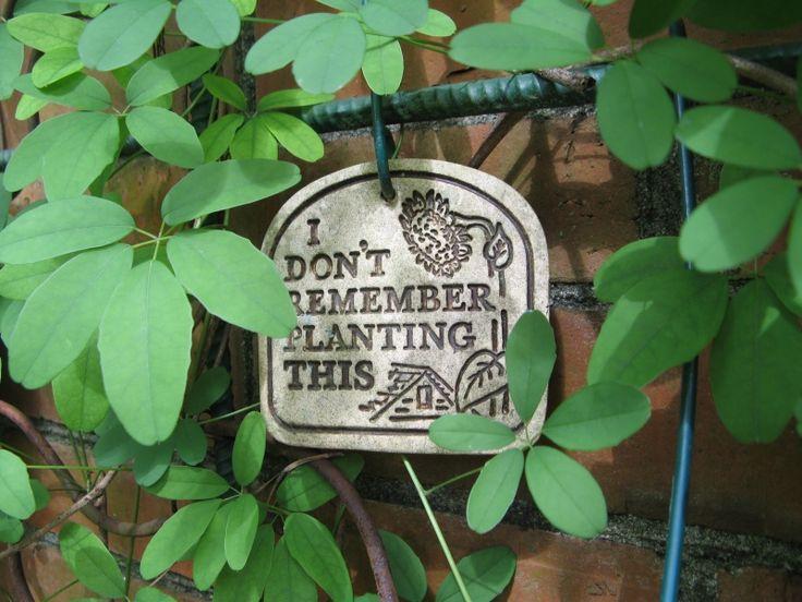 Cute Vegetable Garden Ideas