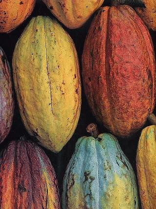 History of Chocolate - The World Atlas of Chocolate (MC) A cool picture of cocoa pods in rows together. Showing the different colors of the cocoa beans.