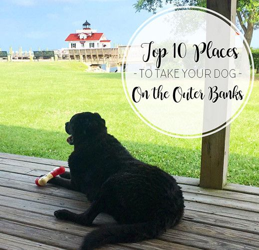 Spending quality time with your favorite four legged friend is a great way to spend any day. So why not go out and adventure around the Outer Banks with them too? Check out these spots you and your pup will enjoy in our Top 10 Places to Take Your Dog On The Outer Banks. 1. … Continue reading Top 10 Places To Take Your Dog On The Outer Banks